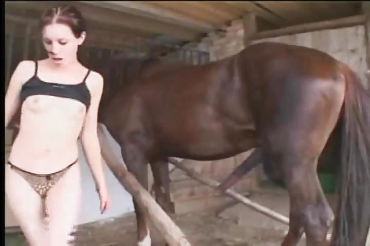 Horse MIX Collection