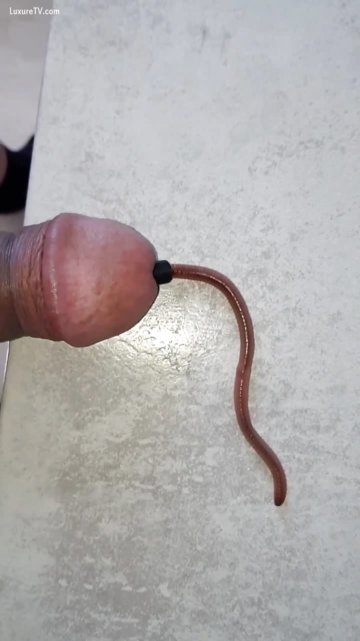 Fat worm in cock